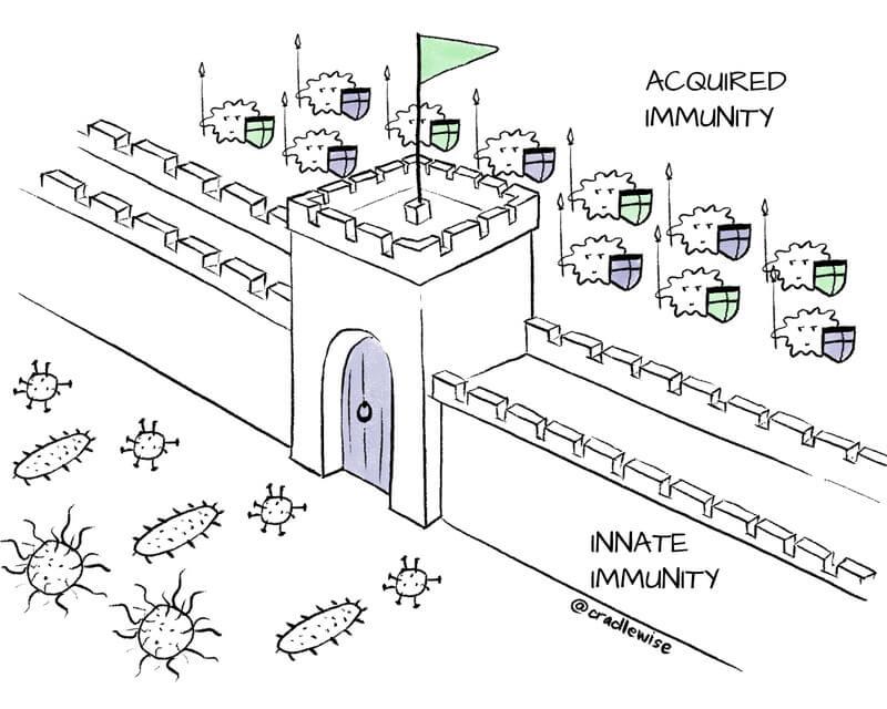 Immune System: Acquired and Innate Immunity