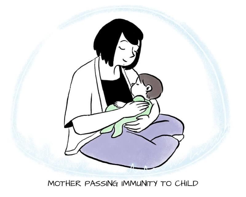 Breastfeeding and baby immune system